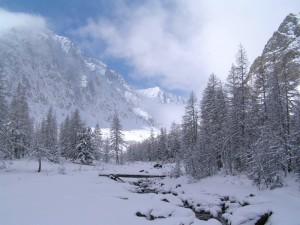 Тайга. Зима